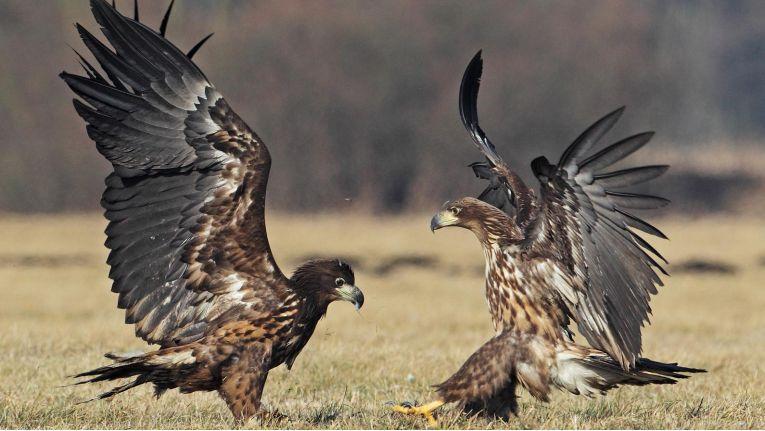 Machtkämpfe zwischen den Generationen beschränken sich nicht auf die Tierwelt. Auch in Unternehmen kann es manchmal hoch her gehen.
