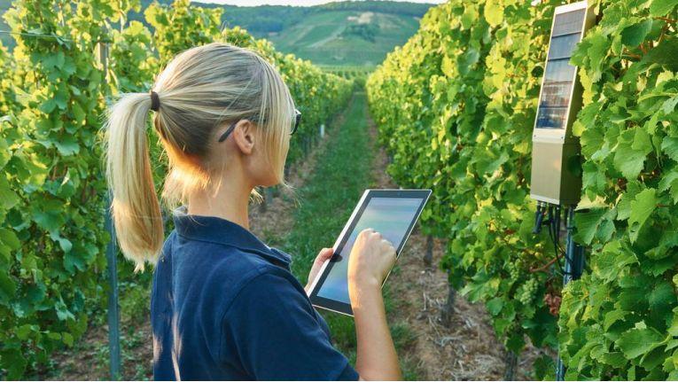 Dank Internet of Things haben die Winzer alle relvanten Daten auf Tablet und Smartphone im Blick.