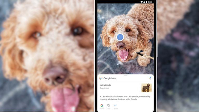 Google Lens erkennt immer mehr Gegenstände.
