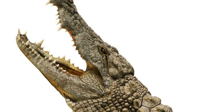 Die Geschichte vom Krokodil im Abwassernetz kann noch so oft widerlegt werden, sie wird trotzdem gern weitererzählt, genausi wie die IT-Legende, dass Flash-Speicher (SSD) ein Storage-System teuer machen.